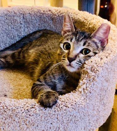 Percy Houston Cares Animal Rescue