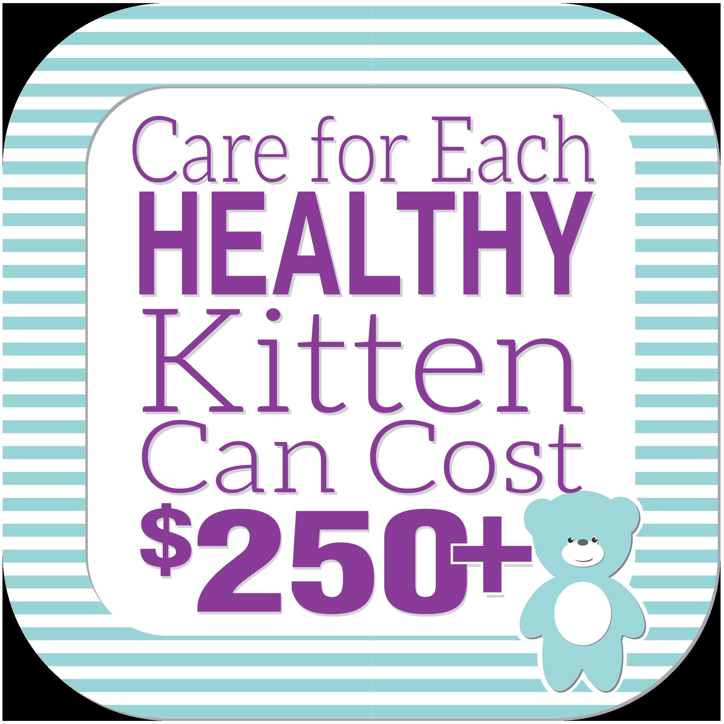 Healthy kitten cost
